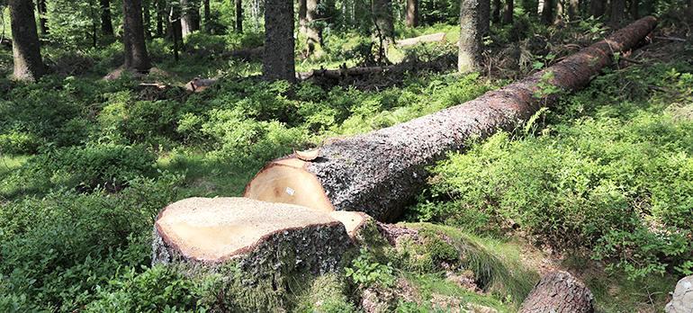 Umgefallener Baumstamm